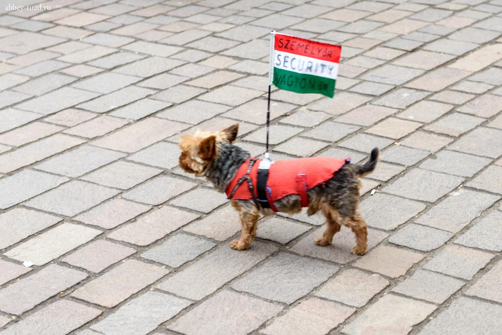 Собака отмечает день Венгерской революции 1848 года